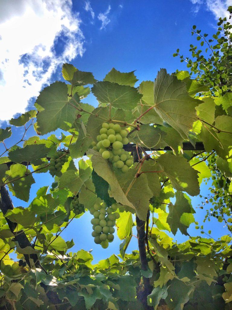 Badia a Coltibuono vineyard on a Tuscany, Italy road trip