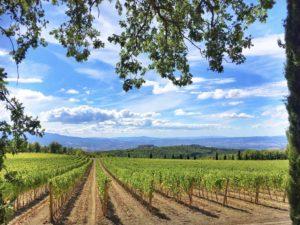Poggio Antico vineyard in Montalcino, Tuscany